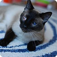 Adopt A Pet :: Margo - St. Louis, MO