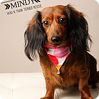 Adopt A Pet :: Mindy-Pending Adoption - Omaha, NE