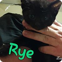 Adopt A Pet :: Rye - McDonough, GA