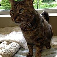 Adopt A Pet :: Berry - Byron Center, MI