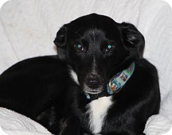 Retriever (Unknown Type)/Terrier (Unknown Type, Medium) Mix Dog for adoption in Avon, New York - Rita