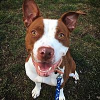 Adopt A Pet :: Zariah - Bruce Township, MI