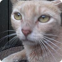 Adopt A Pet :: Momma - Medford, NY