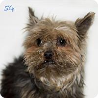 Adopt A Pet :: Sky - Shamokin, PA