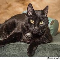 Adopt A Pet :: Maddie - Reno, NV