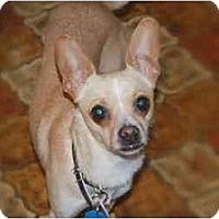 Adopt A Pet :: Chloe - Rigaud, QC