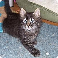 Adopt A Pet :: Lady Sansa - Orinda, CA