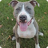 Adopt A Pet :: ROADRUNNER - Gilbert, AZ