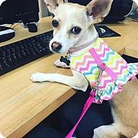 Adopt A Pet :: Wendy - Dallas, TX