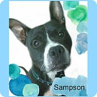 Adopt A Pet :: Sampson - Des Moines, IA
