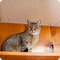 Adopt A Pet :: Sasha - Statesville, NC