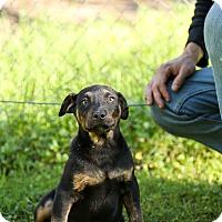 Adopt A Pet :: Pooh - Auburn, CA