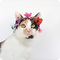Adopt A Pet :: Au Litter - Estelle (Mom) - Williamston, MI