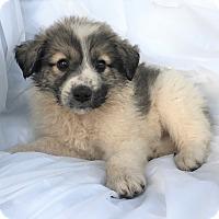 Adopt A Pet :: Jenna - Mooresville, NC