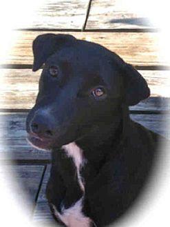 Labrador Retriever Mix Dog for adoption in Lufkin, Texas - Piper