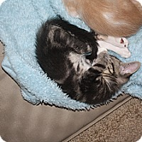 Adopt A Pet :: Branson - Loveland, CO