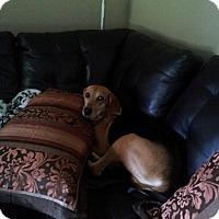 Adopt A Pet :: Queenie - Leesburg, VA