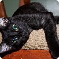 Adopt A Pet :: Joplin - Phoenix, AZ