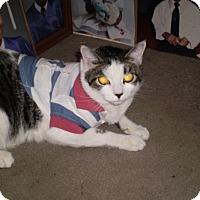 Adopt A Pet :: Zinny - Brooklyn, NY