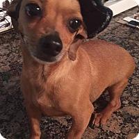 Adopt A Pet :: Copper Penny - Ball Ground, GA