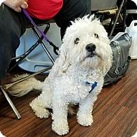 Adopt A Pet :: Beauregard - Dallas, TX
