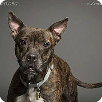 Adopt A Pet :: Mercedes - Blacklick, OH