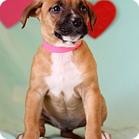 Adopt A Pet :: Faye - Waldorf, MD