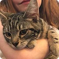 Adopt A Pet :: Nemo - Eureka, CA