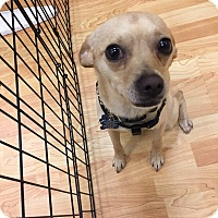 Adopt A Pet :: Tanner - Valencia, CA