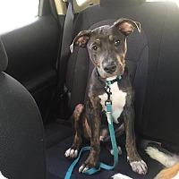 Adopt A Pet :: Leo - Pinellas Park, FL