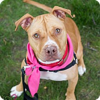 Adopt A Pet :: Molly - Grand Rapids, MI