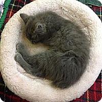 Adopt A Pet :: Bullet - Lake Charles, LA