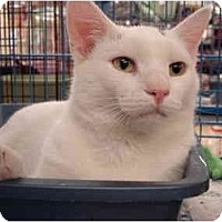 Adopt A Pet :: Gus - Chesapeake, VA