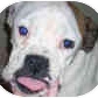 Adopt A Pet :: Grace - Sunderland, MA