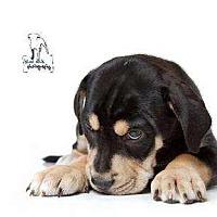 Adopt A Pet :: Felix - Rochester, NY