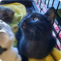 Adopt A Pet :: Jellybean - Scottsdale, AZ