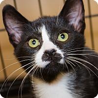 Adopt A Pet :: Shelton - Irvine, CA