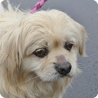 Adopt A Pet :: Georgie - Meridian, ID