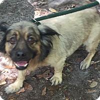 Adopt A Pet :: Marston - Orlando, FL