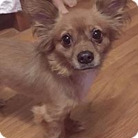 Adopt A Pet :: Tod - Millersville, MD