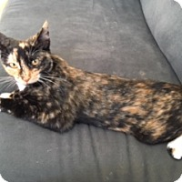 Adopt A Pet :: Macy - McHenry, IL