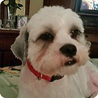 Adopt A Pet :: Snickers - Corona, CA