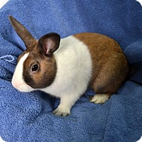 Adopt A Pet :: Bruce - Wheaton, IL