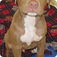 Adopt A Pet :: Oliver - Holton, KS