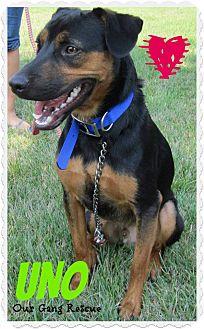 Terrier (Unknown Type, Medium) Mix Dog for adoption in Cincinnati, Ohio - Uno