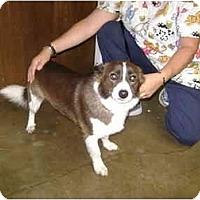 Adopt A Pet :: Dimaggio - Inola, OK