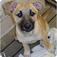 Adopt A Pet :: Jodie - Winter Haven, FL