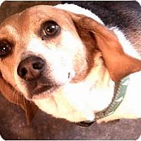 Adopt A Pet :: Lola - URGENT - Indianapolis, IN
