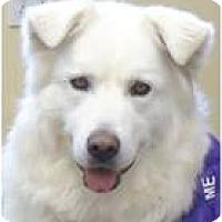 Adopt A Pet :: Alaska - Beachwood, OH
