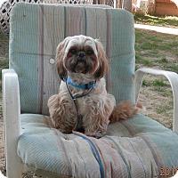 Adopt A Pet :: Dexter - Clarksville, TN